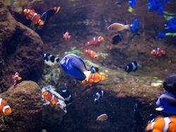Travel | Aquarium of the Pacific