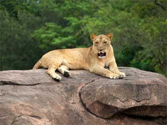 Photos   From the Safari