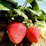 Profile | Otilio Farms